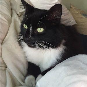 My boy Sylvester